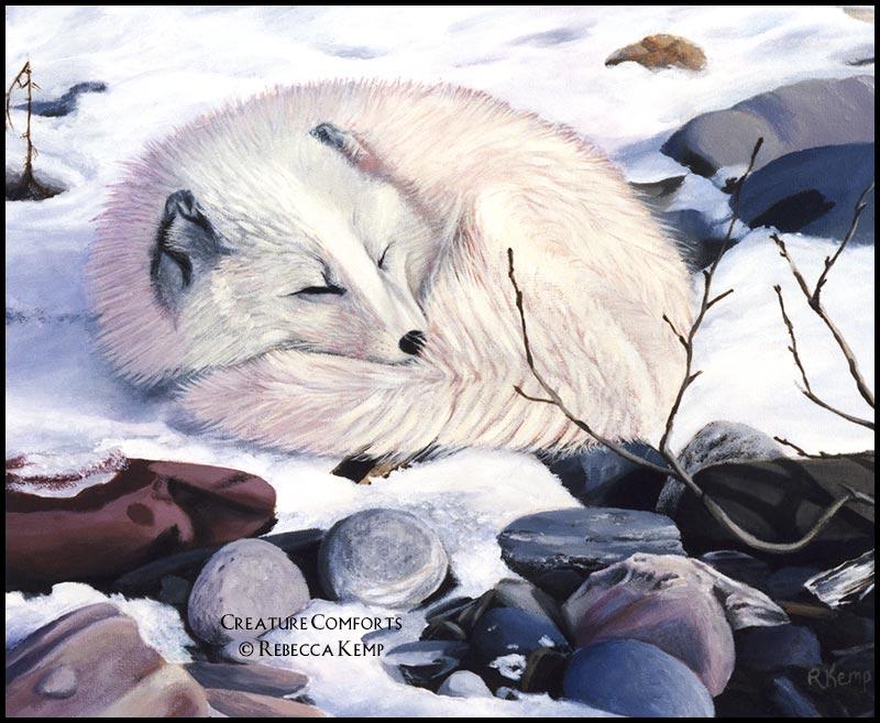 Creature Comforts -  arctic fox