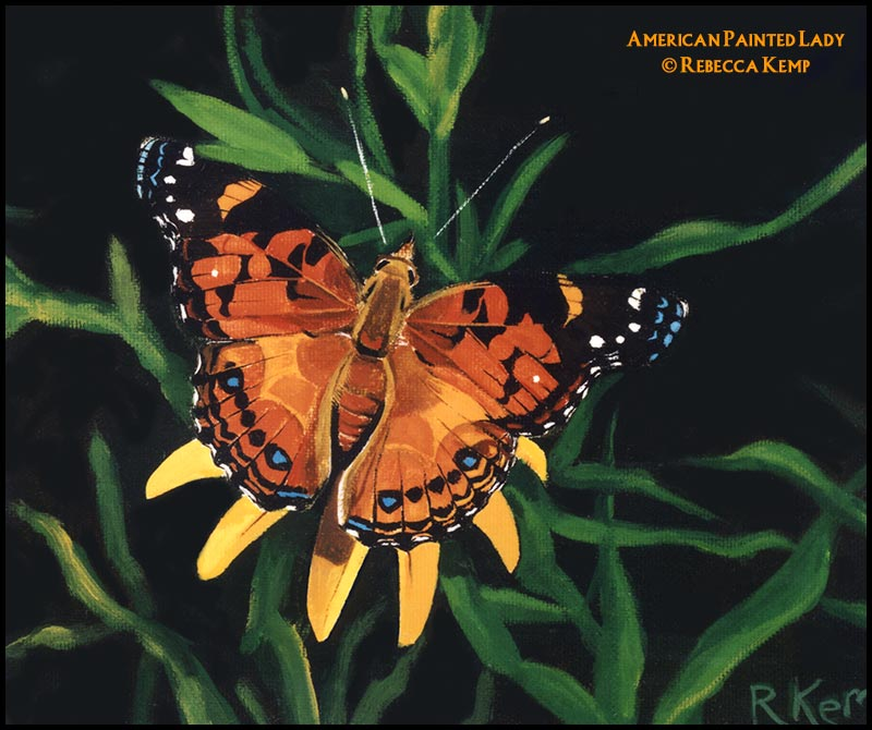 American Painted Lady -  organge butterfly