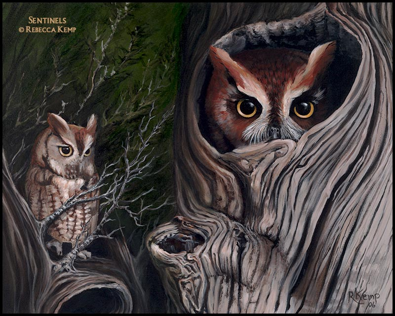 Sentinels - Eastern screech owls