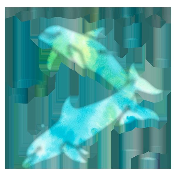 Aqua Sea Dolphins